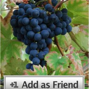 friend request: monastrell
