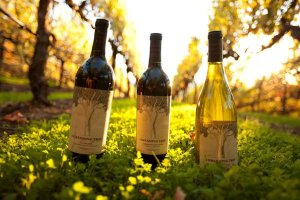 dave matthews dreaming tree wine bottles