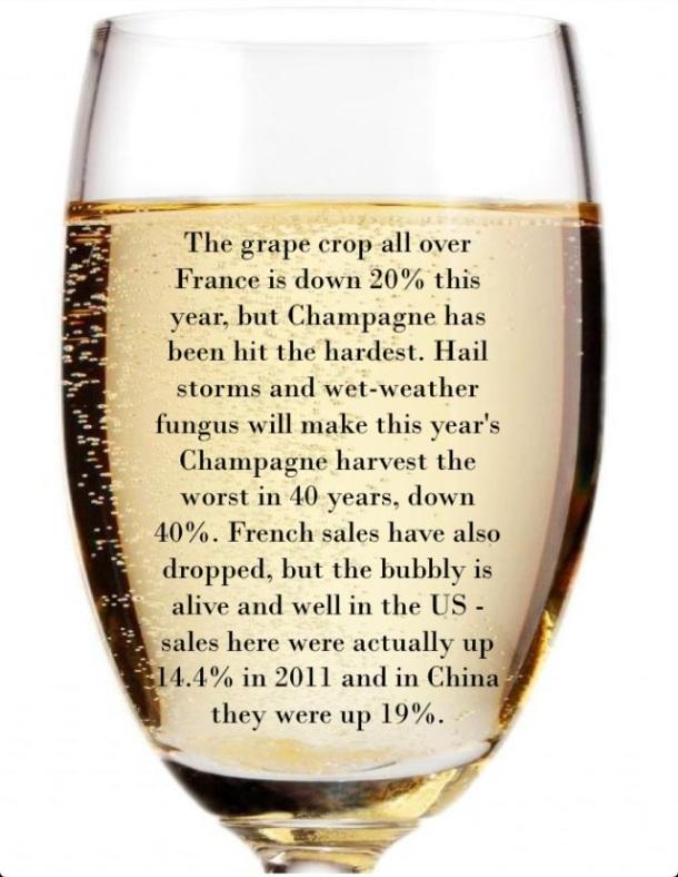 champagne crop