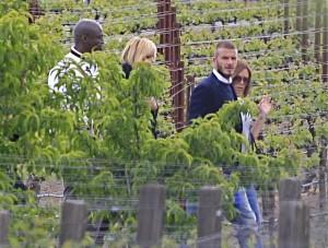 david beckham wine