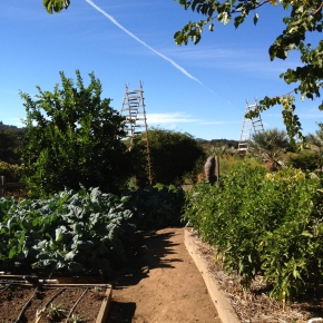 biodynamic basics
