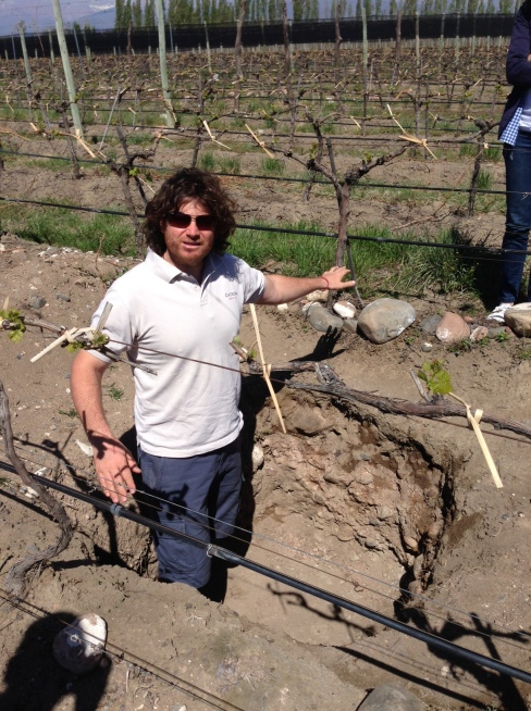 luis the vineyard manager showing us the white bones soil