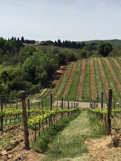 vineyards at the Greppone Mazzi estate in Montalcino